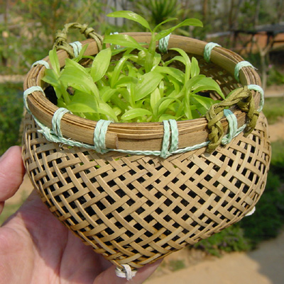 Orchid pots and baskets specially designed to allow air ventilation ...